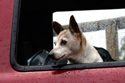 Trasporto animali auto